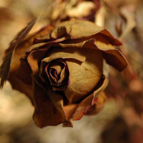Schönheit und Trauer 6